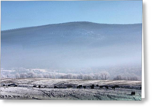 Best Sellers -  - Grazing Snow Greeting Cards - Cattle in Freezing fog Greeting Card by Denise Jenks