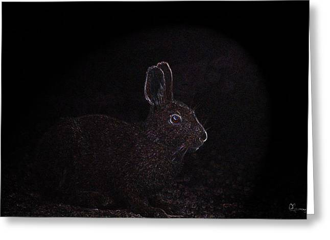 Bunnie Greeting Cards - Caught in the Light Greeting Card by Andrea Lawrence
