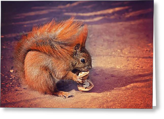 Red Squirrel Greeting Cards - Caught Red Handed Greeting Card by Carol Japp