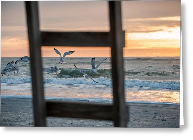 Flying Seagull Greeting Cards - Caught You In My Frame Greeting Card by Chad Talton