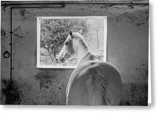 Panoramic Greeting Cards - Cavallo Greeting Card by Edoardo Rebecchi