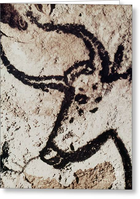 Paleolithic Greeting Cards - Cave Art: Lascaux Greeting Card by Granger