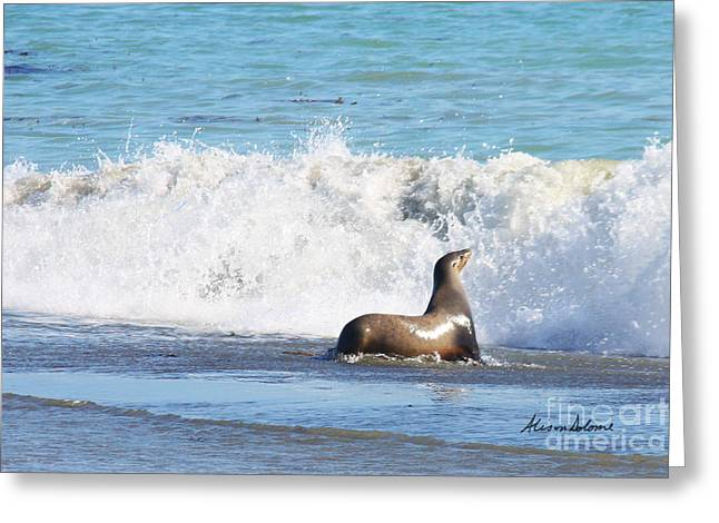 California Sea Lions Greeting Cards - Cayucos Beach Bum Greeting Card by Alison Salome