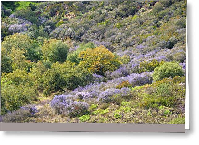 Ceanothus Hillsides Greeting Card by Alexander Kunz