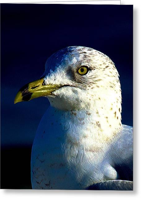 Cedar Key Greeting Cards - Cedar Gull IV Greeting Card by Jeff Kurtz