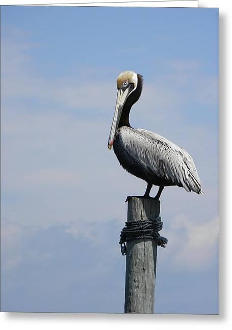 Cedar Key Greeting Cards - Cedar Key Pelican 2 Greeting Card by Warren Thompson