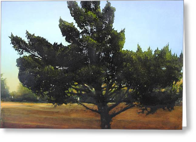 Cedar Sold Greeting Card by Cap Pannell