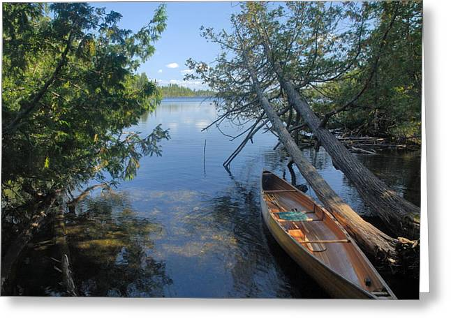 Cedar Tree Greeting Cards - Cedar Strip Canoe and Cedars at Hanson Lake Greeting Card by Larry Ricker