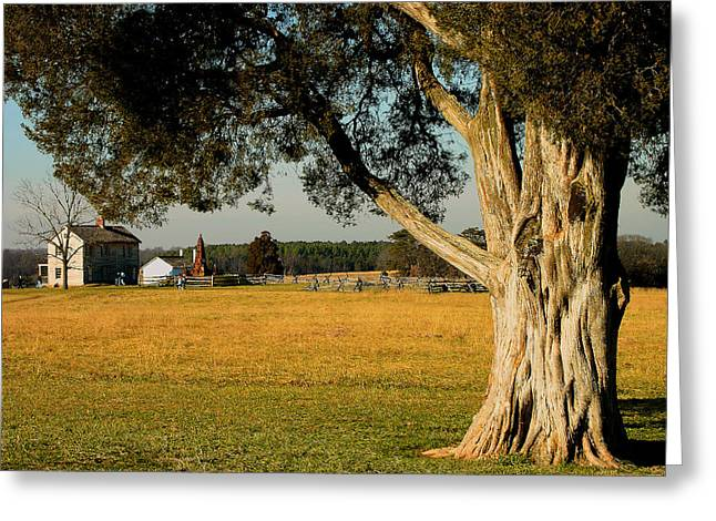 Civil War .tree Greeting Cards - Cedar Tree and Henry House II  Greeting Card by Steven Ainsworth