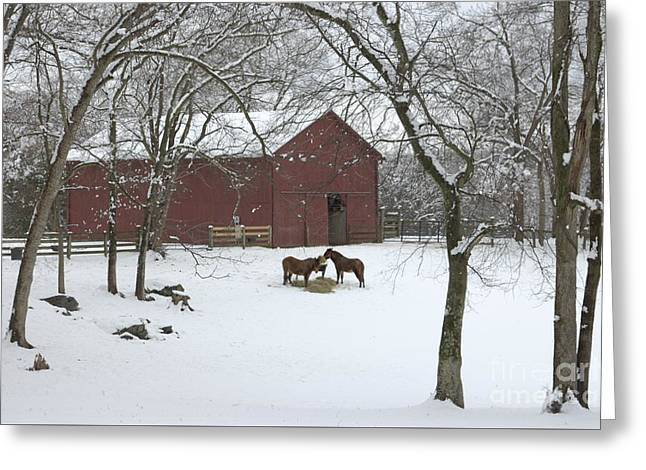 Cedarock Park In The Snow Greeting Card by Benanne Stiens