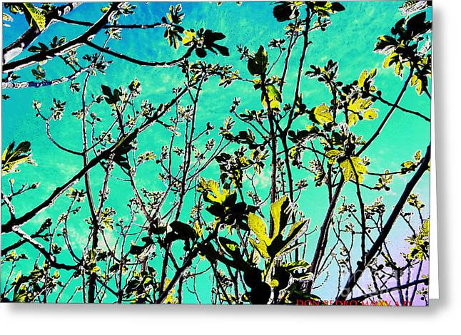 Figtree Greeting Cards - Celebrating The Spring Greeting Card by Don Pedro De Gracia