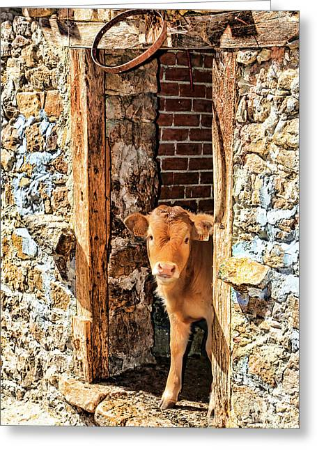 Barn Door Greeting Cards - Celoca_155A9327a Greeting Card by Diana Sainz