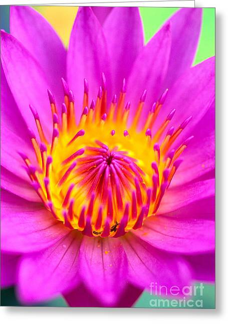 Waterlily Stamen Greeting Cards - Center Of Pink Greeting Card by Bill Brennan - Printscapes