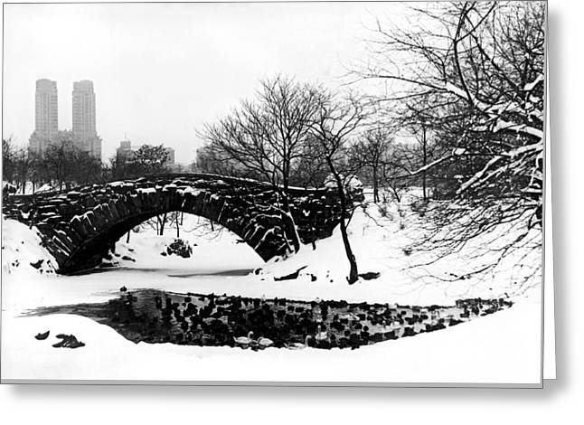 Wintry Photographs Greeting Cards - Central Park Duck Pond Greeting Card by American School
