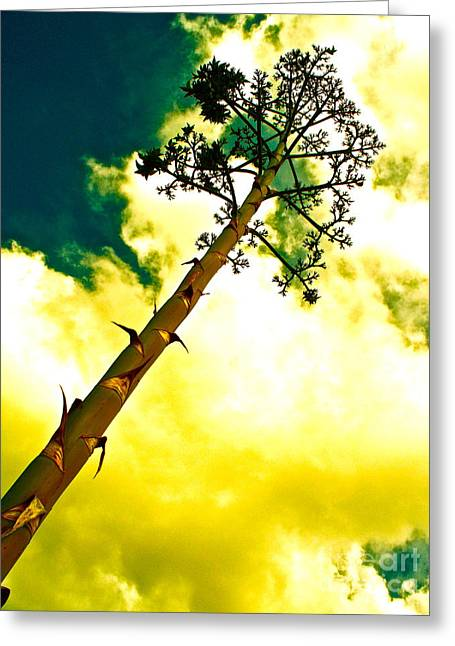 Reaching Up Greeting Cards - Century Plant Seed Stalk Greeting Card by Chuck Taylor