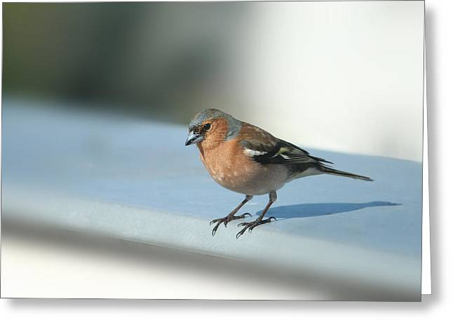 Realization Greeting Cards - Chaffinch Greeting Card by Heike Hultsch