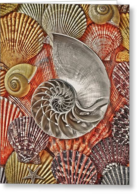 Mollusk Greeting Cards - Chambered Nautilus Shell Abstract Greeting Card by Garry Gay