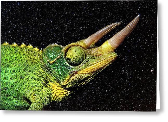 Chameleon Night Greeting Card by Sean Davey
