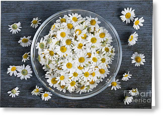 Wooden Bowls Greeting Cards - Chamomile flowers in bowl Greeting Card by Elena Elisseeva