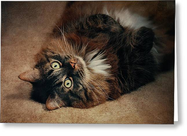 Champagne - My Lazy Main Coon Cat Greeting Card by Maria Angelica Maira