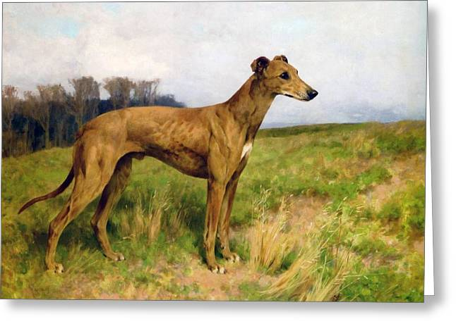 Greyhound Dog Greeting Cards - Champion Greyhound Dee Flint Greeting Card by Celestial Images