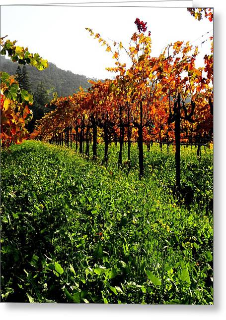 Northern California Vineyards Greeting Cards - Changing Vines Greeting Card by Elizabeth Hoskinson