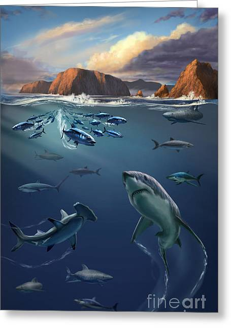 White Shark Photographs Greeting Cards - Channel Islands Sharks Greeting Card by Jim Dowdalls