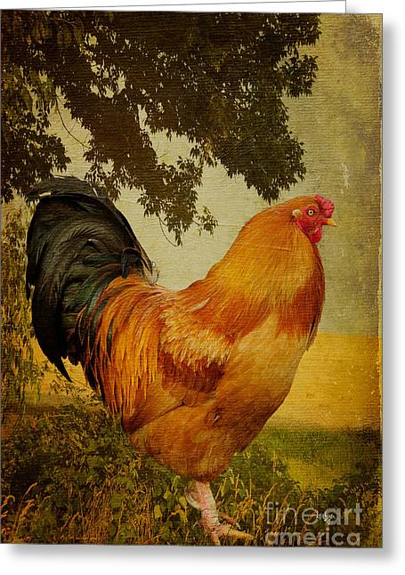 Chicken Greeting Cards - Chanticleer Greeting Card by Lois Bryan