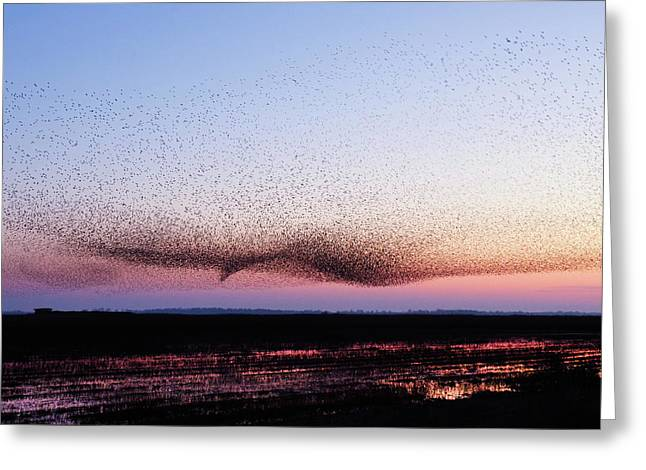 Chaos In Motion - Bird Of Many Birds Greeting Card by Roeselien Raimond