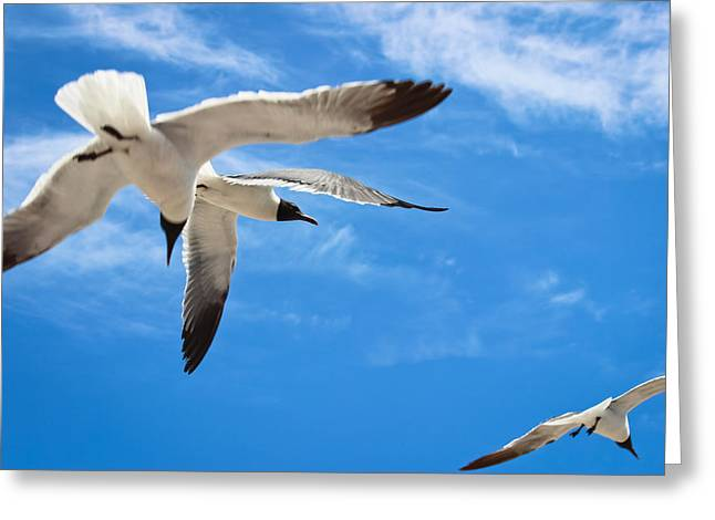 Seabirds Greeting Cards - Chaos - Seagulls in Flight Greeting Card by Colleen Kammerer