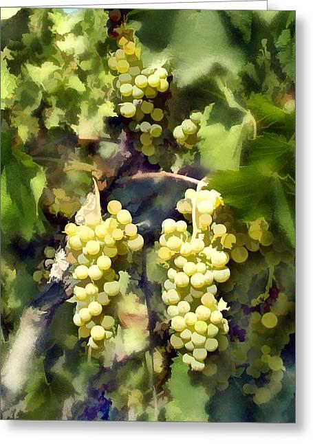 California Vineyard Greeting Cards - Chardonnay Greeting Card by Kurt Van Wagner
