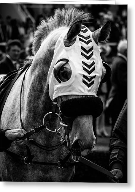 Race Horse Greeting Cards - Charismatic race horse Greeting Card by Timothy Lens Attack
