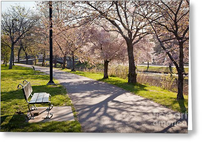 Charles River Greeting Cards - Charles River Cherry Trees Greeting Card by Susan Cole Kelly