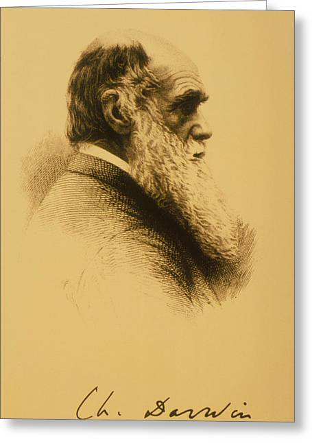 Discoverer Greeting Cards - Charles Robert Darwin Greeting Card by .