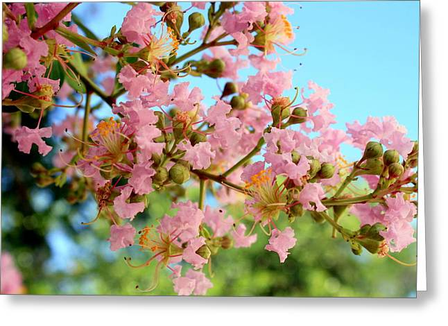 Blalock Greeting Cards - Charleston Blossoms Greeting Card by Dana  Oliver