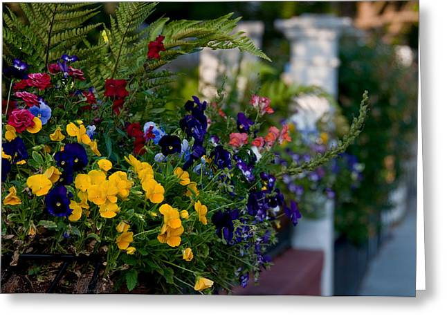 Charleston Flower Boxes Greeting Card by Melissa Wyatt