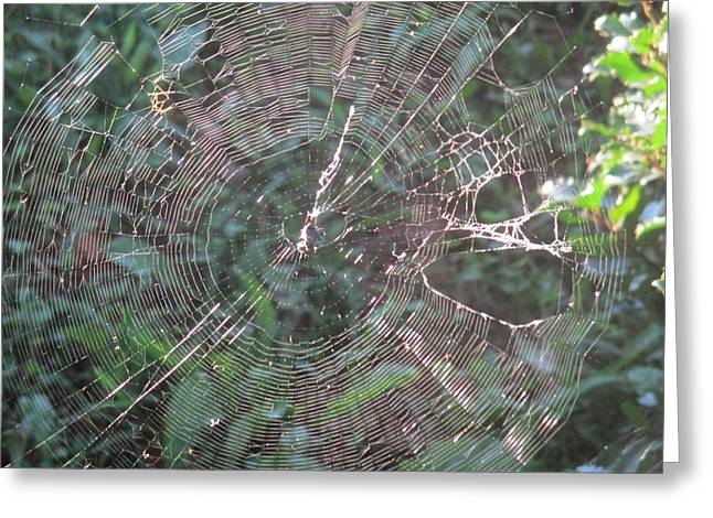 Charlotte Fine Art Greeting Cards - Charlottes Web Greeting Card by Charlotte Gray