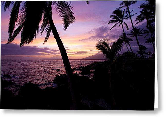 Charly Greeting Cards - Charly Young Sunset Greeting Card by James Roemmling
