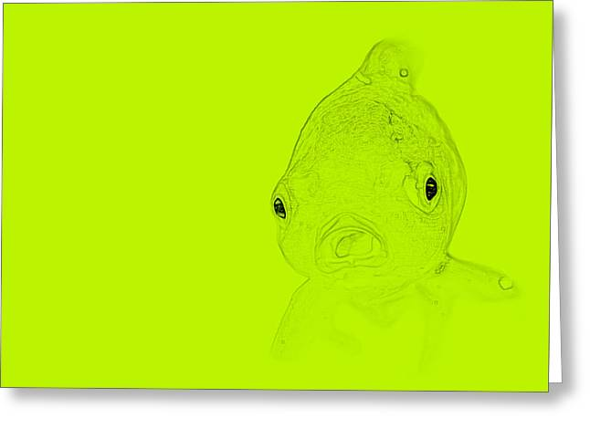 Chartreuse Fish Greeting Card by  Judy Bernier