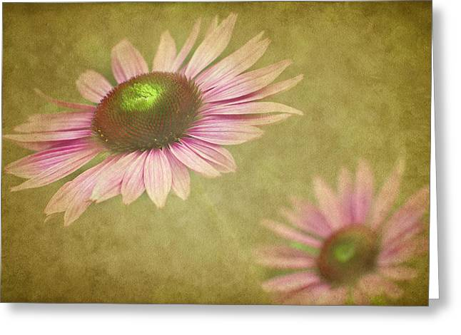 Cone Flowers Greeting Cards - Chase Me Greeting Card by Rebecca Cozart