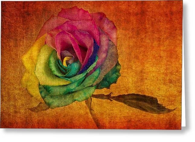 Multicolored Roses Greeting Cards - Chasing Rainbows Greeting Card by Marina Kojukhova