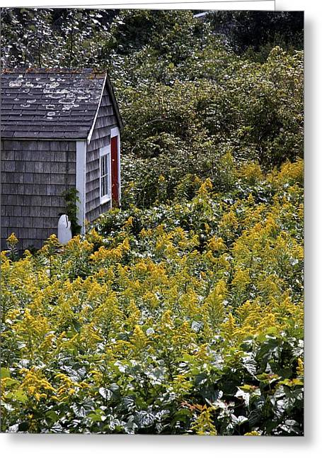 Chatham Greeting Cards - Chatham Shed Greeting Card by Jim Gillen