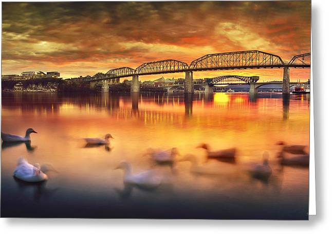 Tennessee River Greeting Cards - Chattanooga Sunset with Ducks Greeting Card by Steven Llorca
