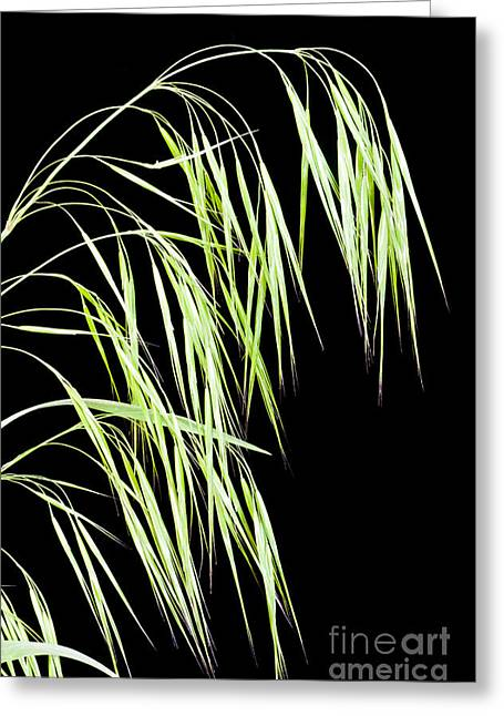 Invasive Species Greeting Cards - Cheatgrass Greeting Card by William H. Mullins