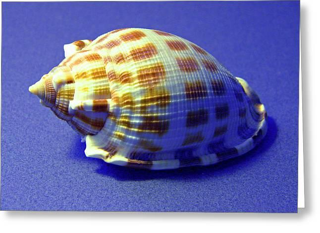 Frank Ocean Greeting Cards - Checkered Helmet Seashell Greeting Card by Frank Wilson