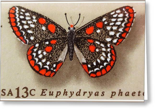 Checkerspot Greeting Cards - Checkerspot Butterfly Greeting Card by Lanjee Chee