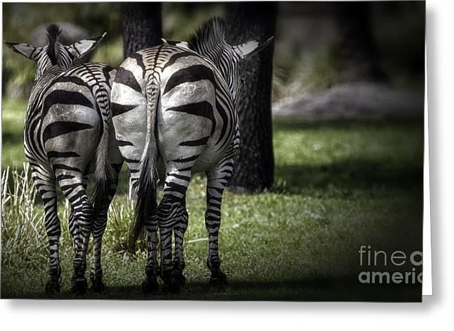 Prints Of Zebras Greeting Cards - Cheek To Cheek Greeting Card by Mary Lou Chmura