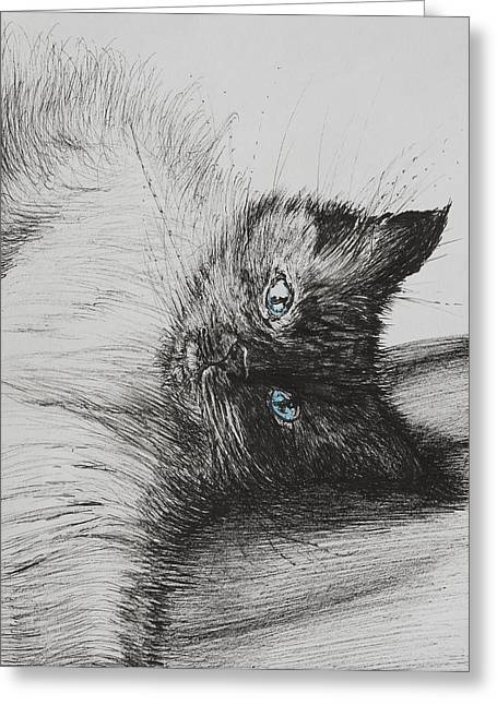 Cat Drawings Greeting Cards - Cheeky Baby Greeting Card by Vincent Alexander Booth