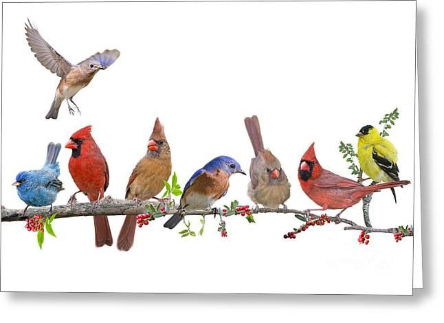 Cheerful Songbird Congregation Greeting Card by Bonnie Barry
