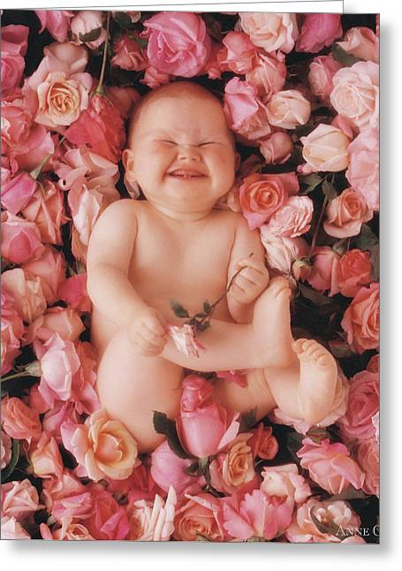 Pink Roses Greeting Cards - Cheesecake Greeting Card by Anne Geddes